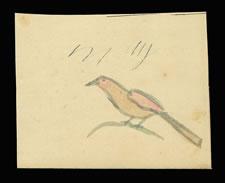 LANCASTER COUNTY, PENNSYLVANIA GERMAN WATERCOLOR OF A SMALL BIRD ON A TWIG, CA 1840-60